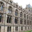 London - Natural History Museum - England — Stock Photo