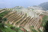 Longji rice terraces Guangxi province China — Stock Photo