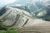 Longji rice terraces — Foto Stock