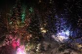 Arbres dans la neige — Photo