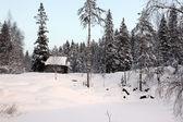 Maison seule dans la forêt d'hiver — Foto de Stock