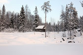 Alone home in Winter forest — Stock Photo