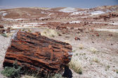Large section of petrified wood at Petrified Forest National Park, Arizona. — Stock Photo