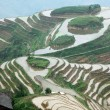 Stock Photo: Longji rice terraces
