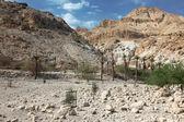 National park Ein Gedi — Stock Photo