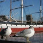Seagull in Manhattan — Stock Photo #42730413