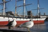 Seagull in Manhattan — Stock Photo