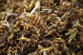 Roasted Insects — Stock Photo