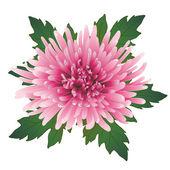 Vector chrysanthemum flower. — Stock Vector