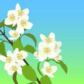 矢量樱桃开花. — 图库矢量图片