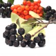Stock Photo: Aronia and ashberry.
