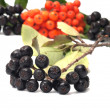 Aronia and ashberry. — Stock Photo #20319717