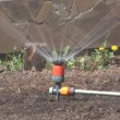 Stock Video: Sprinkler.