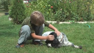 Boy and spaniel. — Stock Video