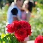 Rosebush also kiss couple — Stock Photo #50360711