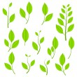 Green plants set — Stock Vector
