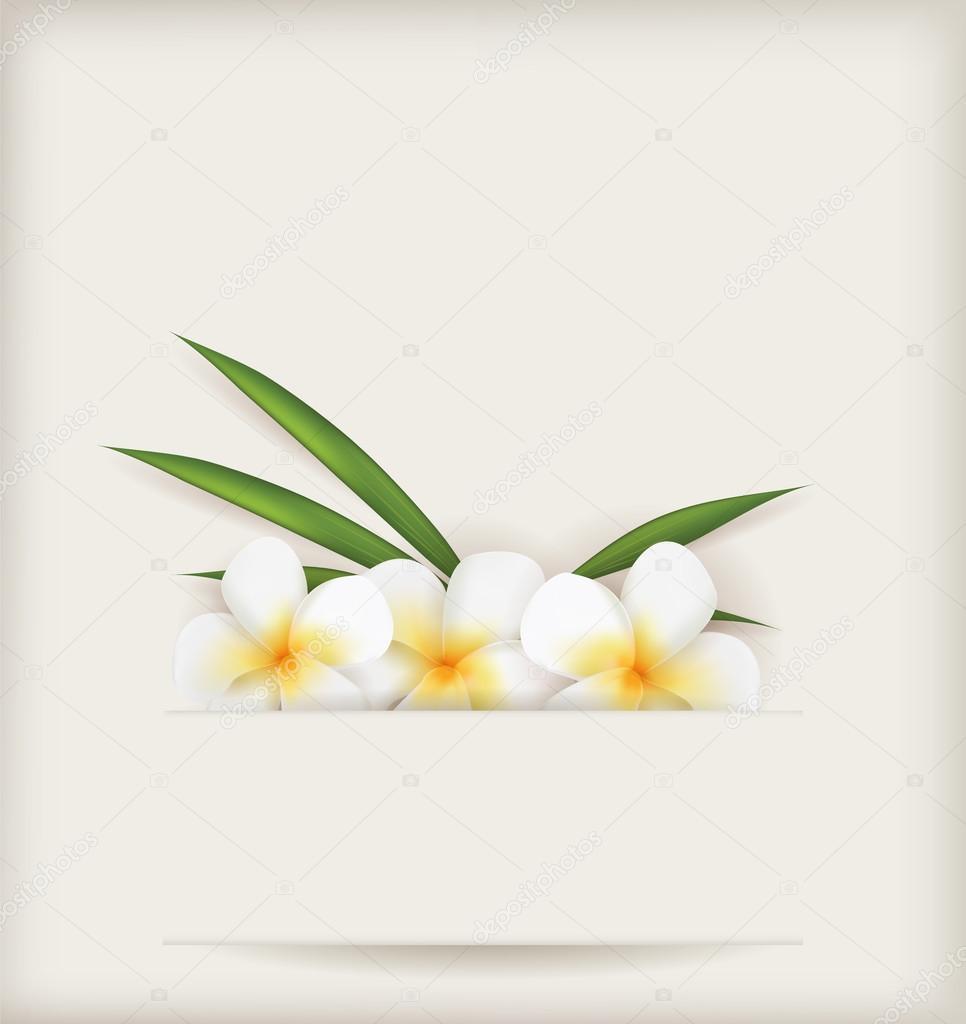 Plumeria fiori di nozze