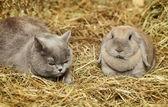 Gatto e coniglio — Foto Stock