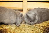 Cat and Rabbit — Stock Photo