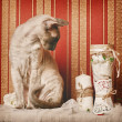 Peterbald Cat — Stockfoto