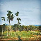 Thai Landscape — Stock Photo