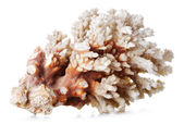Krásný korál — Stock fotografie