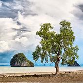 Strom na pobřeží — Stock fotografie