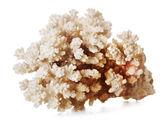 Beautiful Coral — Stock Photo
