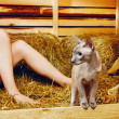 Stock Photo: Peterbald Cat on Hayloft