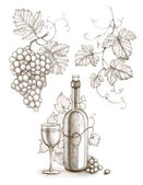 Pencil drawing of wine bottle and grape — Stock Photo