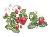 Watercolor strawberry bush — Stock Photo