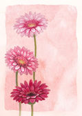 Watercolor background with gerber flower illustration — Foto Stock