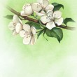 Background with watercolor apple flowers — Stock Photo #37132865