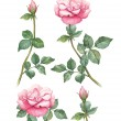 Stock Photo: Watercolor illustrations of rose flowers