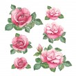 Watercolor illustrations of rose flowers — Stock Photo #39800809
