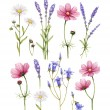 Collection de fleurs sauvages. Illustrations aquarelle — Photo #41335253