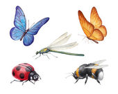 Watercolor insects illustrations — Stock Photo