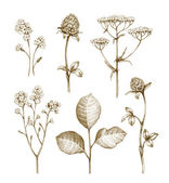 Wild flowers collection isolated on white background — Stock Photo