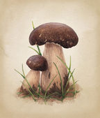 Watercolor porcini mushrooms — Stock Photo