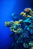 Group of coral fish water. — Photo