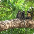 Monkeys in tropical rainforest — Stock Video