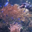 Tropical Fish — Stock Video