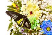 бабочка и цветок. — Стоковое фото