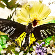 Stockfoto: Butterfly and flower.