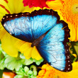 Butterfly and flower. — Stock Photo #22213543
