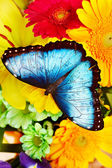 Butterfly and flower. — Stock Photo