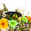 Butterfly and flower. — Stock Photo #22899452