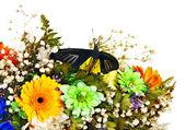 Fjäril och blomma. — Stockfoto