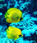 Grupo de peces en el agua. — Foto de Stock