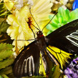 Butterfly and flower. - Stock Photo